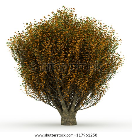 3d English elm in autumn with yellow leaves isolated over white - stock photo