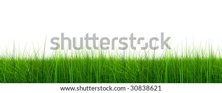 3d green grass rendered at maximum quality isolated on white background, ideal for nature,environment,sport or health designs - stock photo