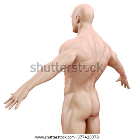 3d human body render - stock photo