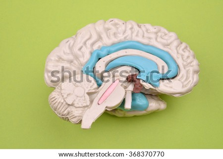 3D human brain model from external on green background - stock photo