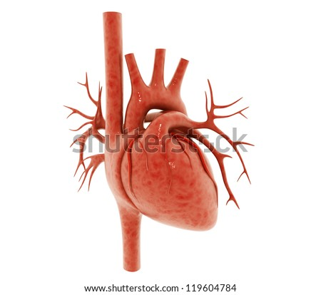 3d human heart isolated on white background - stock photo