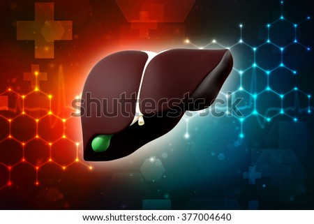 3d human Liver and Gallbladder - stock photo
