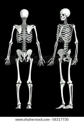 3d human skeleton stock images, royalty-free images & vectors, Skeleton