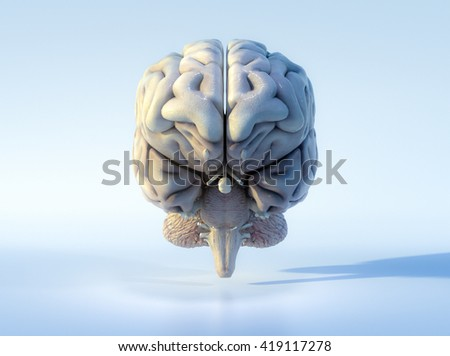 3D illustrated detailed view of the human brain. Front view. - stock photo