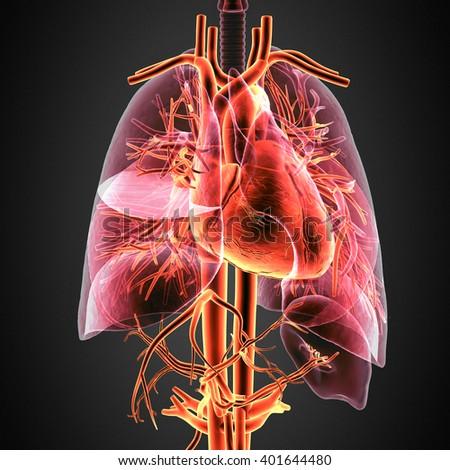 3D illustration Human anatomy heart - stock photo