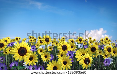 3d illustration of a flower field - stock photo