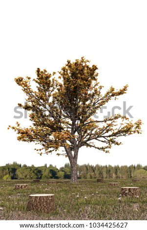 3d illustration of a singe tree on a deforestated field
