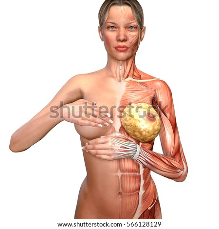 3d Illustration Woman Anatomy Controlling Her Stock Illustration