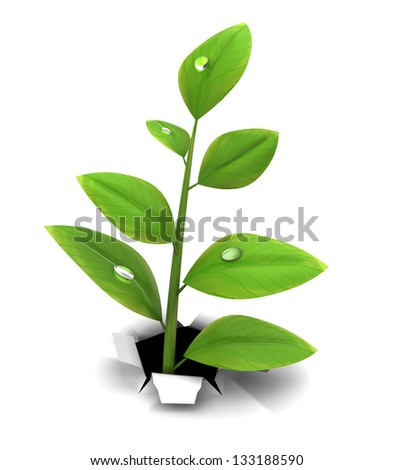 3d illustration of green herb growing through white background - stock photo