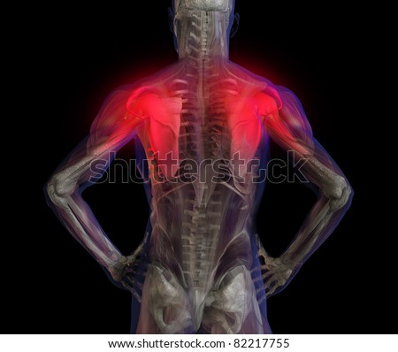 3D illustration of human male anatomy and skeleton. Shoulder and back pain. - stock photo