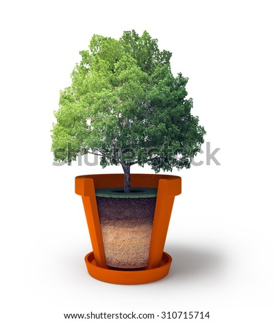 3d illustration of section of pot with bonsai tree isolated on white background - stock photo