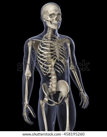 3D Illustration of Skeleton on a Black Background - stock photo