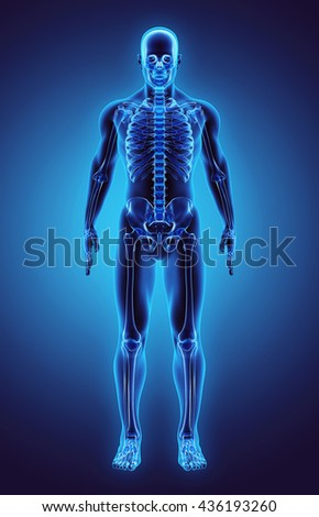 3D illustration - Part of Human Skeleton.