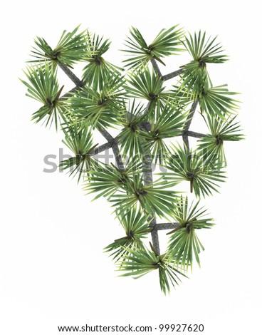 3d  Madagascar Screw Pine  isolated over white - stock photo