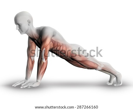 3D male medical figure with partial muscle map in yoga pose - stock photo