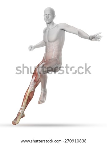 3D male medical figure with partial muscle map landing from a jump - stock photo