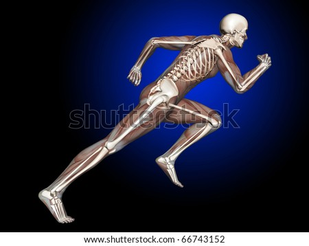 3D Man Running, Muscles and Skeleton, Side View