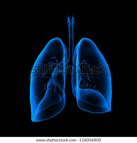 3D medical illustration - lungs back view - stock photo