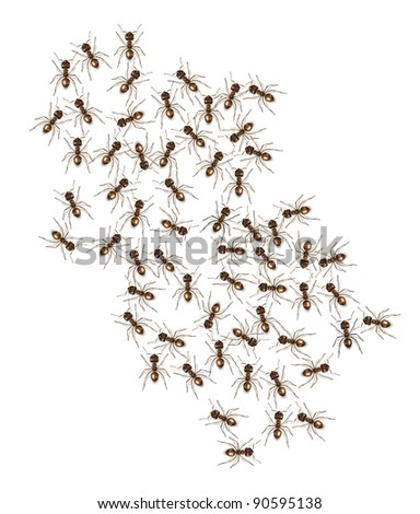 3d modeled and rendered brown ants - stock photo