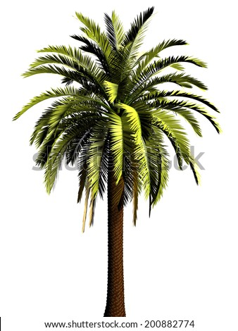 3D Palm tree  high resolution on a white background