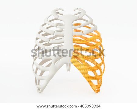 3d printed rib cage - stock photo