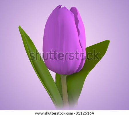 3D purple color tulip flower on purple background. Isolated