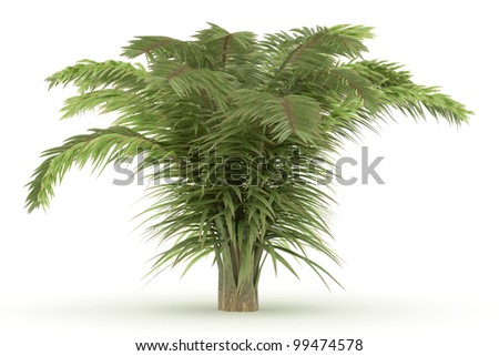 3d  Raffia Palm isolated over white - stock photo