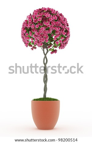 3d render bonsai Peach blossom isolated on white - stock photo