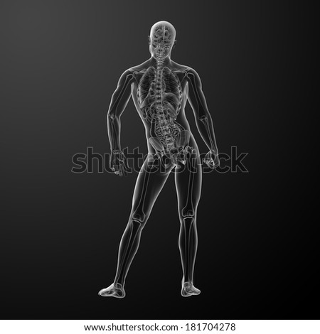 3d render human anatomy - back view - stock photo