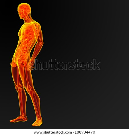3d render iilustration of the male anatomy - side view - stock photo