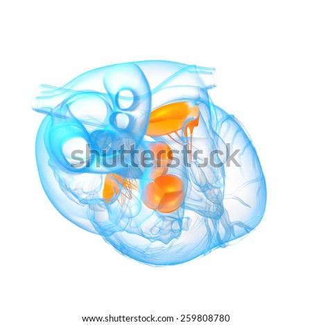 3d render illustration of the Heart valve - top view - stock photo