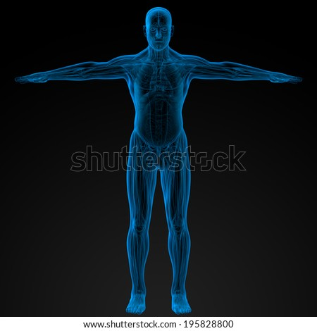 3d render illustration of the human anatomy - front view - stock photo