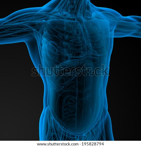 3d render illustration of the human anatomy - side view - stock photo