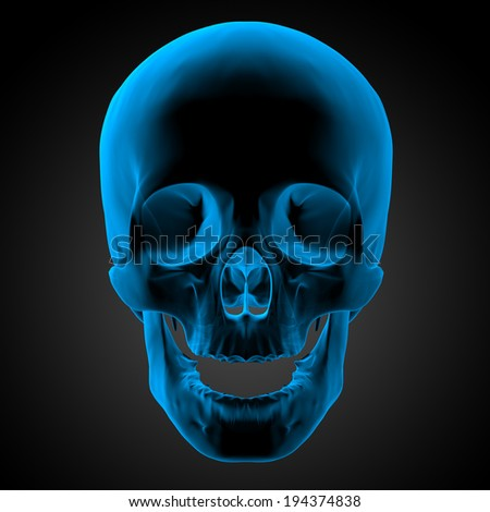 3d render illustration of the human skull - close up