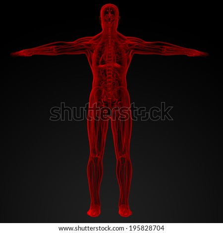 3d render illustration of the Male anatomy - back view - stock photo