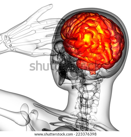 3d render medical illustration of the human brain - back view - stock photo