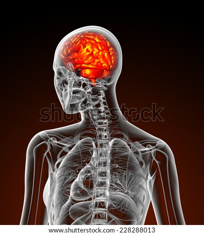 3d render medical illustration of the human brain - back view
