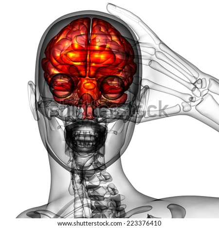 3d render medical illustration of the human brain - front view - stock photo