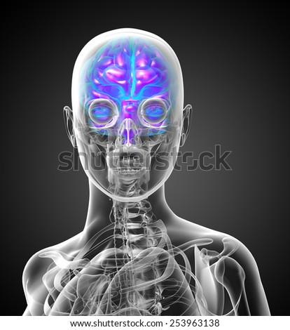 3d render medical illustration of the human brain - front view