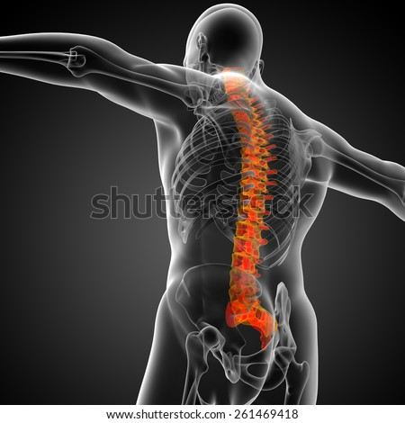 3d render medical illustration of the human spine - bottom view