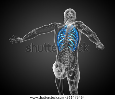 3d render medical illustration of the ribcage - back view
