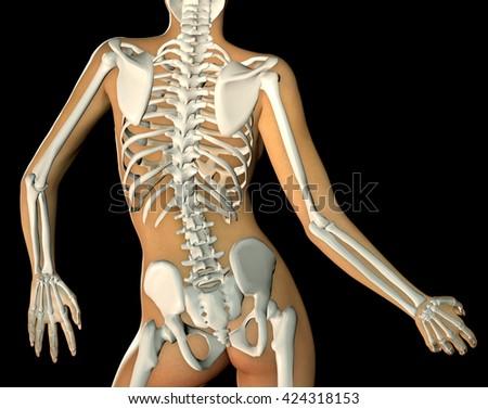 3d Render Back Woman Body Skeleton Stock Illustration 424318153