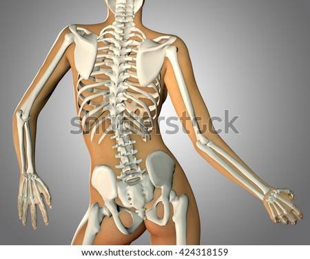 3d Render Back Woman Body Skeleton Stock Illustration 424318159
