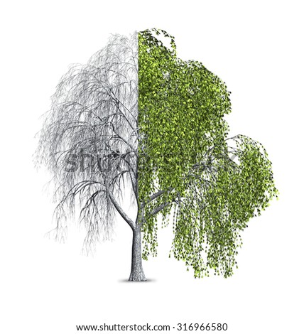 3d render of a Bay Willow tree that is shown as half bare, and half with leaves. - stock photo