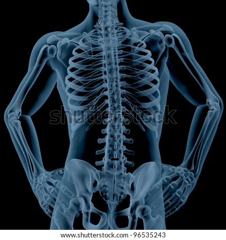 3D render of a close up of a male skeleton torso