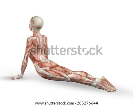 3D render of a female medical figure with spine in yoga position - stock photo