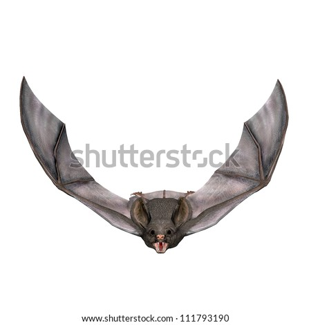 3D Render of a Flying Bat