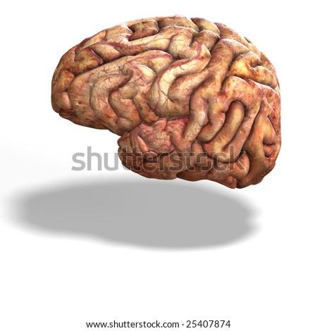 3d render of a human brain with clipping path - stock photo