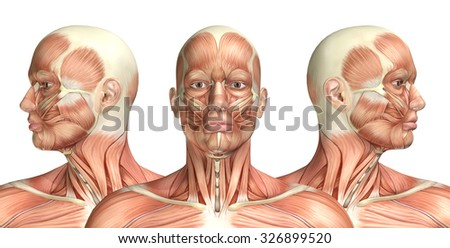 Facial Anatomy Images