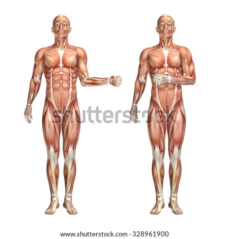 3D render of a medical figure showing shoulder external and internal rotation